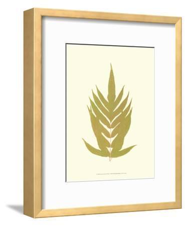 Lowes Fern II-Edward Lowe-Framed Art Print