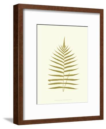 Lowes Fern IV-Edward Lowe-Framed Art Print