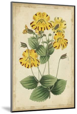 Curtis Blooms in Yellow I--Mounted Art Print