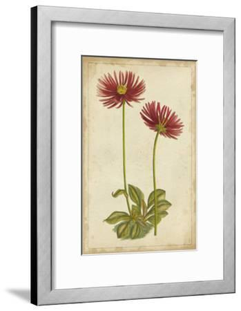 Curtis Blooms in Red II--Framed Art Print