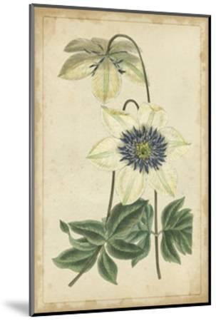 Curtis Blooms in White I--Mounted Art Print