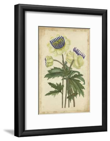 Curtis Blooms in White III--Framed Art Print