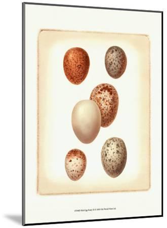 Bird Egg Study III--Mounted Art Print