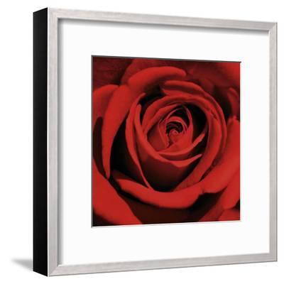 Red Rose-Laurent Pinsard-Framed Art Print