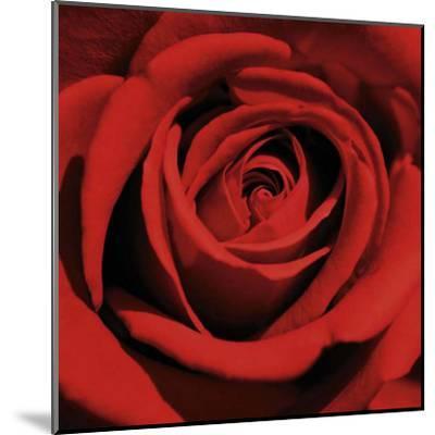 Red Rose-Laurent Pinsard-Mounted Art Print