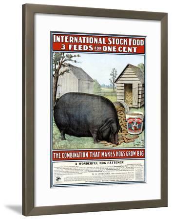 International Hog Swine Feed--Framed Giclee Print