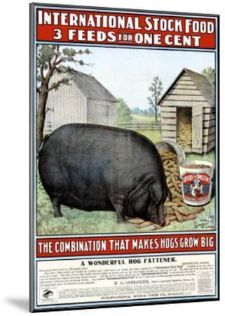 International Hog Swine Feed--Mounted Giclee Print