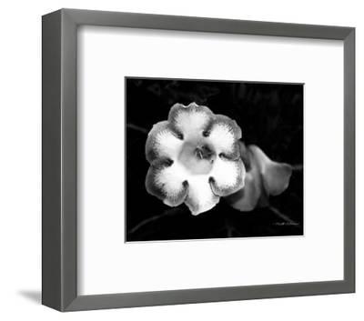 Gloxinia-Harold Silverman-Framed Art Print