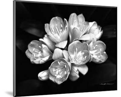 Camellia Bloom-Harold Silverman-Mounted Art Print