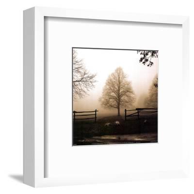 Morning Texture-Harold Silverman-Framed Art Print