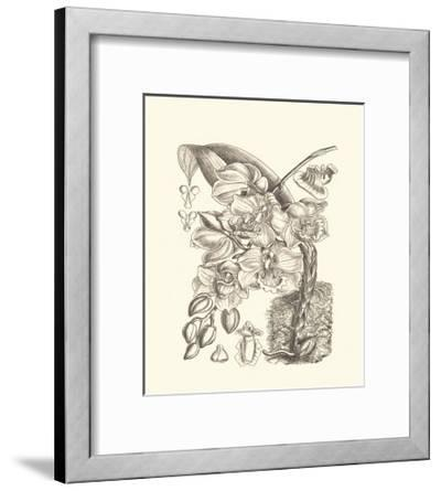Black and White Curtis Orchid VIII-Samuel Curtis-Framed Art Print
