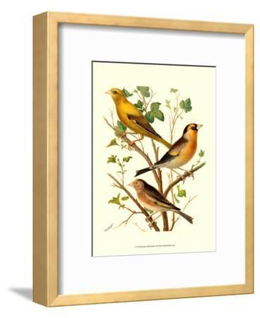 Domestic Bird Family VI-W^ Rutledge-Framed Art Print