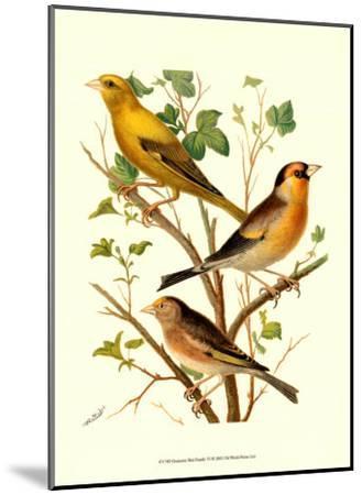 Domestic Bird Family VI-W^ Rutledge-Mounted Art Print