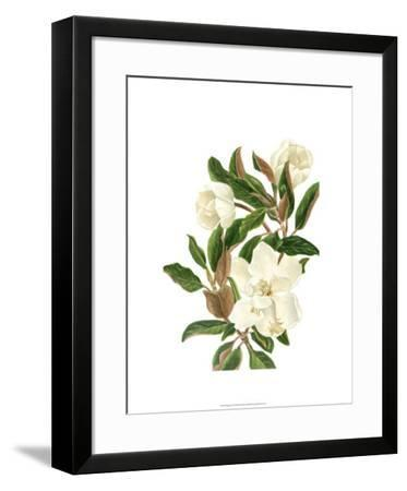 Magnolia II-Pamela Shirley-Framed Limited Edition