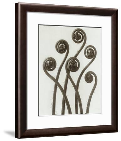 Adiantum Pedatum, Hair Fern-Karl Blossfeldt-Framed Art Print