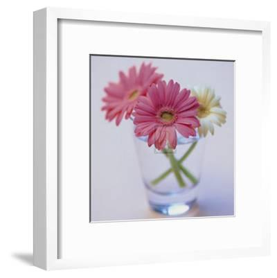 Pretty in Pink--Framed Art Print