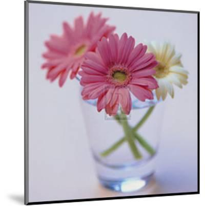 Pretty in Pink--Mounted Art Print