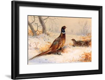 Cock and Hen Pheasant-Archibald Thorburn-Framed Art Print