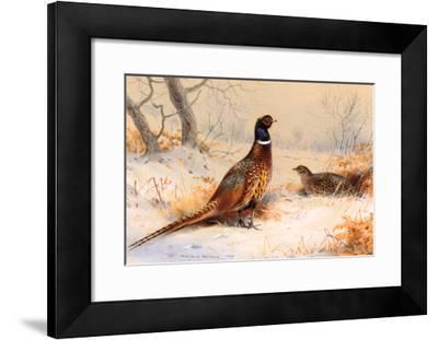 Cock and Hen Pheasant-Archibald Thorburn-Framed Art Print