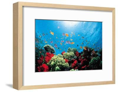 Aquarium-Federico Busonero-Framed Art Print