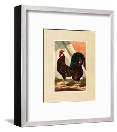 Roosters with Mat V-Cassell's Poultry Book-Framed Art Print