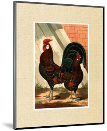 Roosters with Mat V-Cassell's Poultry Book-Mounted Art Print