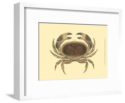 Antique Crab IV-James Sowerby-Framed Art Print