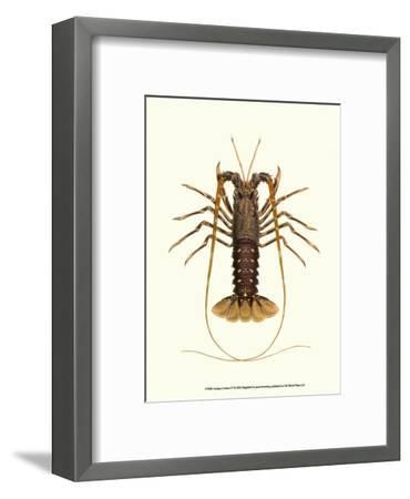 Antique Lobster IV-James Sowerby-Framed Art Print