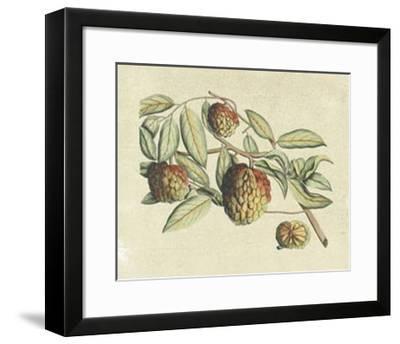Botanical IV-Van Rheet-Framed Premium Giclee Print
