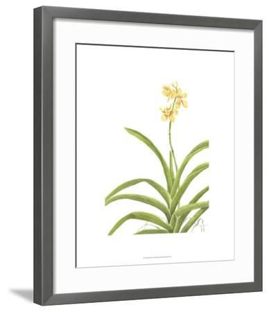 Orchid Study II-Pamela Shirley-Framed Limited Edition