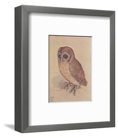 The Owlet-Albrecht D?rer-Framed Art Print