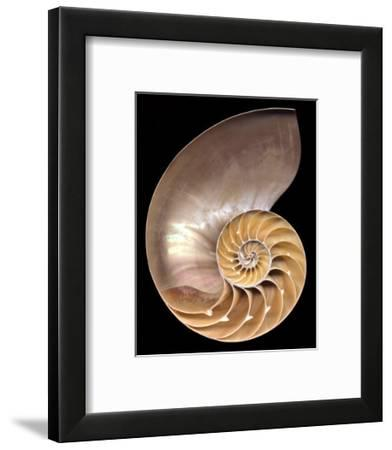 Chambered Nautilus-Harold Feinstein-Framed Art Print