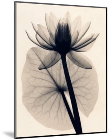 Tropical Water Lily-Judith Mcmillan-Mounted Art Print