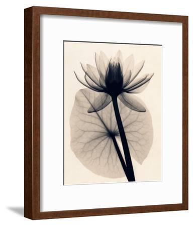 Tropical Water Lily-Judith Mcmillan-Framed Art Print