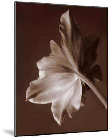 Moonglow Tulip-Rebecca Swanson-Mounted Art Print