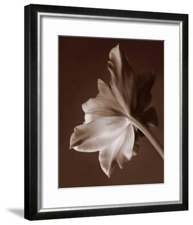 Moonglow Tulip-Rebecca Swanson-Framed Art Print