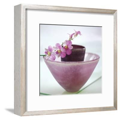 Orchids-H^ Orth-Framed Art Print