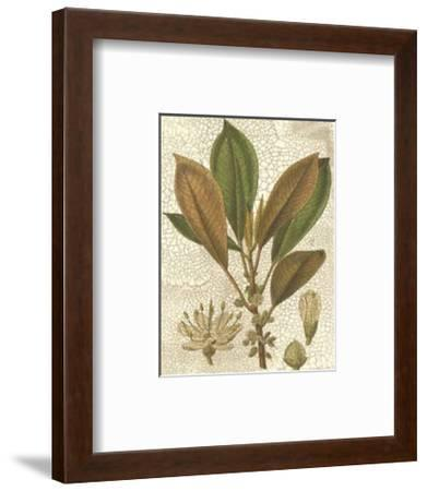 Fitch Leaves IV-Walter H^ Fitch-Framed Art Print