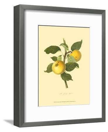 The Grange Apple--Framed Art Print