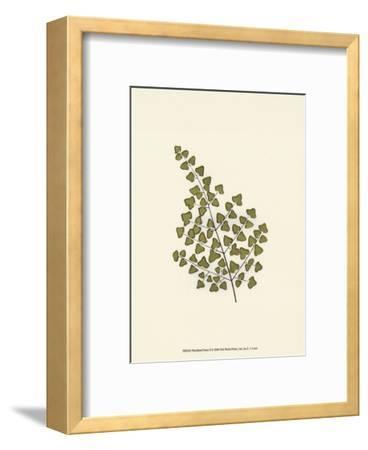 Woodland Ferns II-Edward Lowe-Framed Art Print
