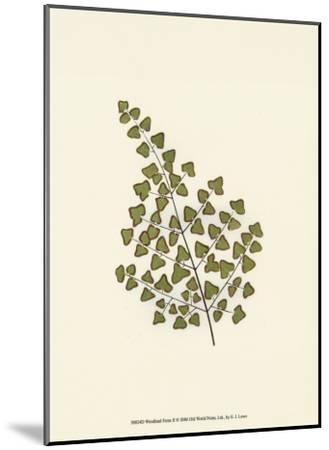 Woodland Ferns II-Edward Lowe-Mounted Art Print