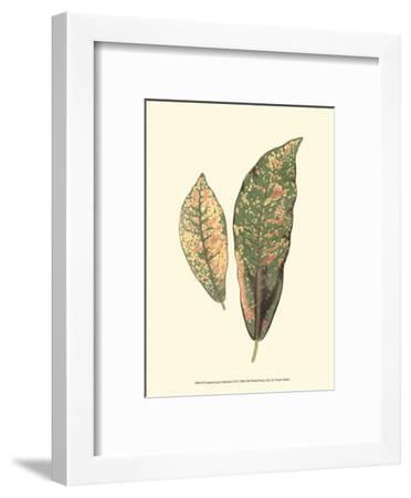 Tropical Leaf Collection VII--Framed Art Print