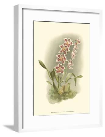 Orchid Garden II-H^g^ Moon-Framed Art Print