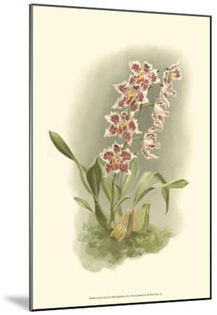 Orchid Garden II-H^g^ Moon-Mounted Art Print