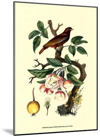 Bird in Nature IV-E^ Guerin-Mounted Art Print