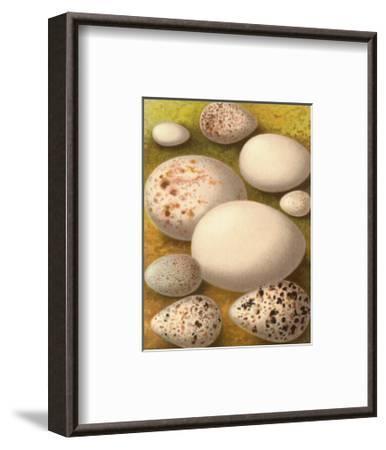Bird Egg Collection III--Framed Art Print