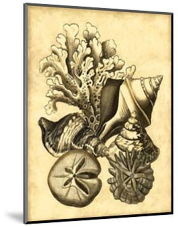 Neutral Shell and Coral Collection II--Mounted Art Print