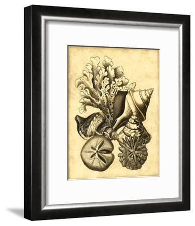 Neutral Shell and Coral Collection II--Framed Art Print