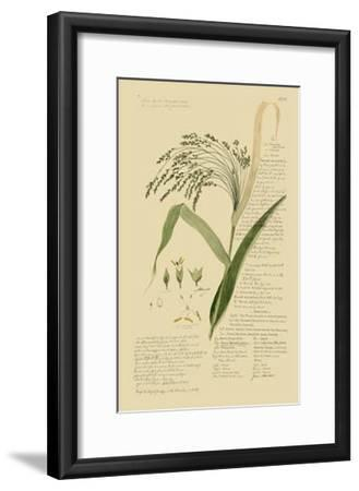 Ornamental Grasses V-A^ Descubes-Framed Giclee Print