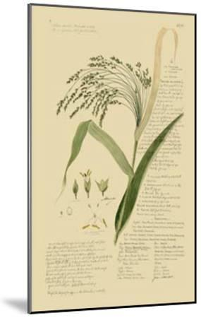 Ornamental Grasses V-A^ Descubes-Mounted Giclee Print